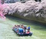 社会人サークル お花見クルーズ 神奈川