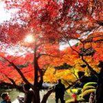 紅葉散歩 新宿御苑